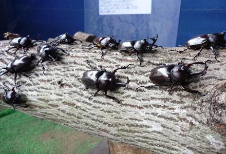 昆虫王国立山 立山自然ふれあい館