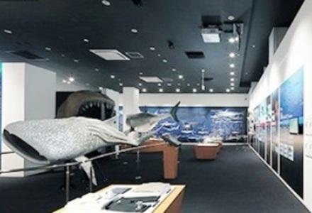 気仙沼 海の市 シャークミュージアム