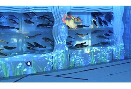 気仙沼 海の市 氷の水族館