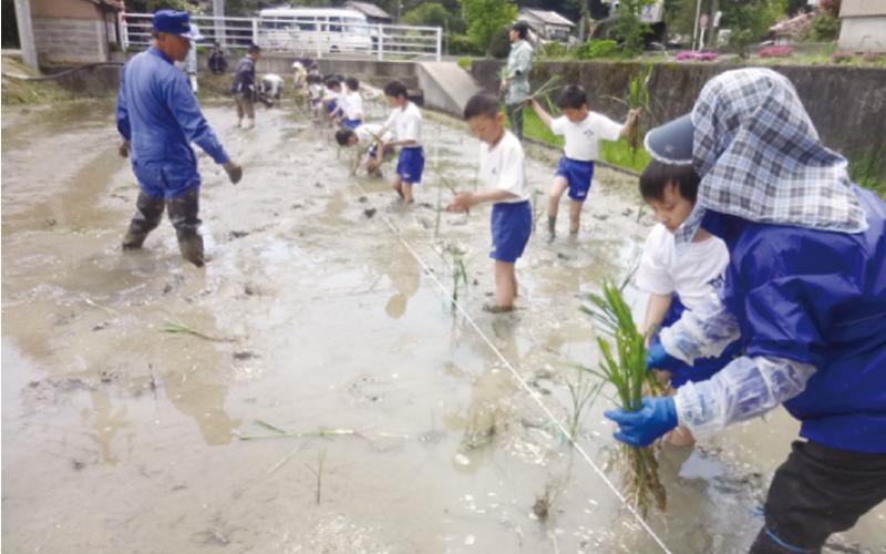 氷見市立海峰小学校<br /> 「マコモタケの栽培体験」